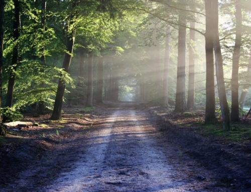 Meine 3 Hilfsmittel für eine positive Einstellung trotz Allergie